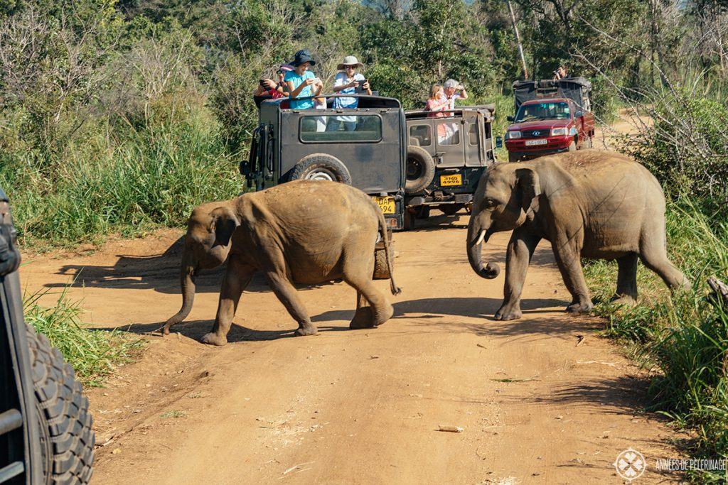 A group of Elephants crossing the road of Minneriya National Park in the North of Sri Lanka