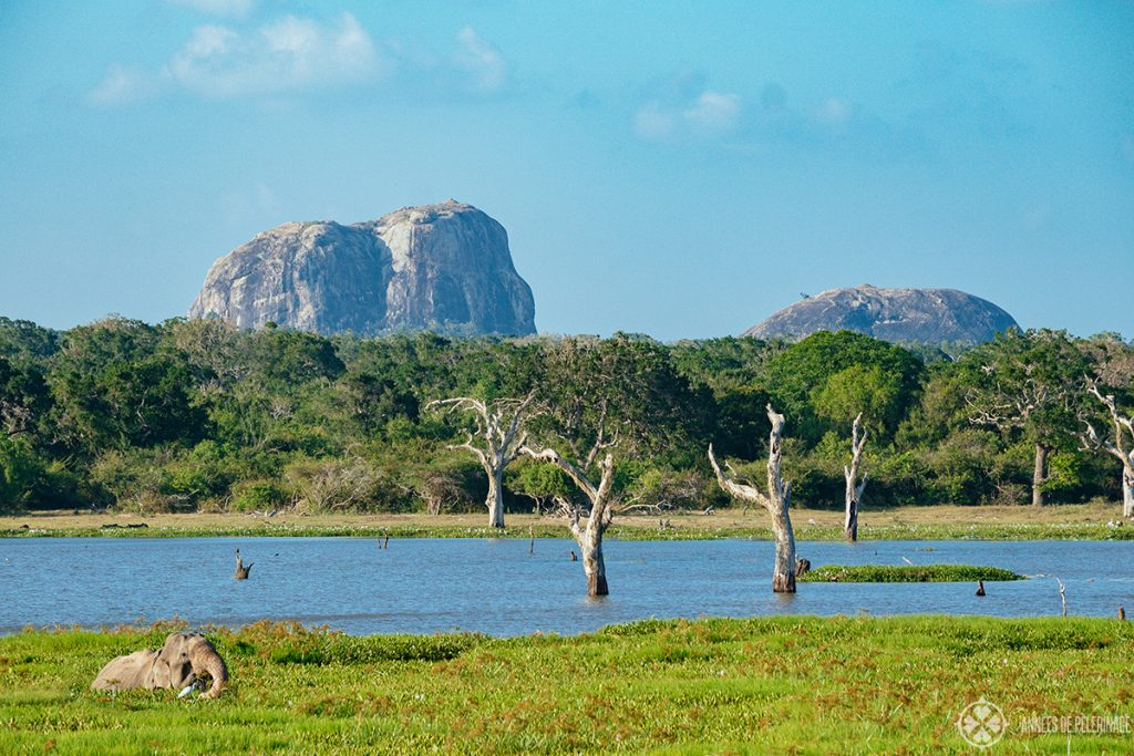 Elephants rock in Yala National Park Sri Lanka