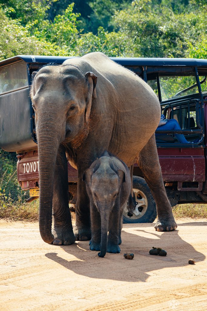 An Elephant mother with her little baby child seen on a safari through Yalla National Park