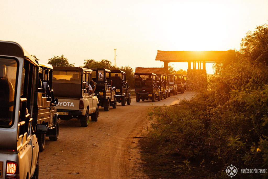Jeeps waiting to get out of Yala national park in the evening close before sunset