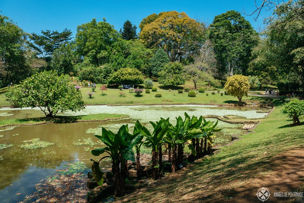 The Royal Botanical Garden in Kandy, Sri Lanka