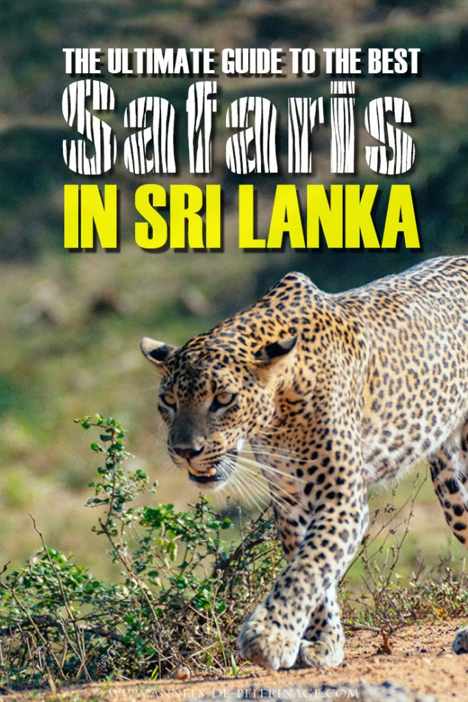 The best Safaris in Sri Lanka. This guide covers all the national parks from Yala National Park to the Bundala wetland. The best time to visit, pros and contras for the various parks and when to stay. The best safari lodges and some expectation management. Click to read the full Sri Lanka safari guide. #travel #wildlife #safari #srilanka #adventure #wanderlust #travelhack