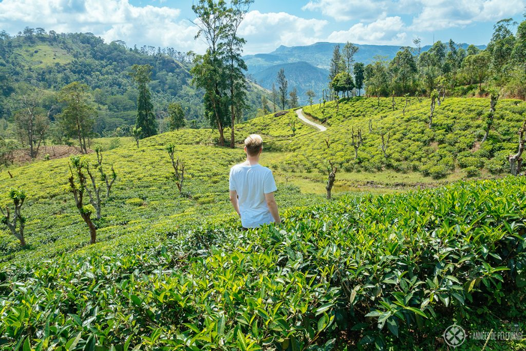 Me at at tea plantation in the Knuckles Forest Reserve near Kandy Sri Lanka
