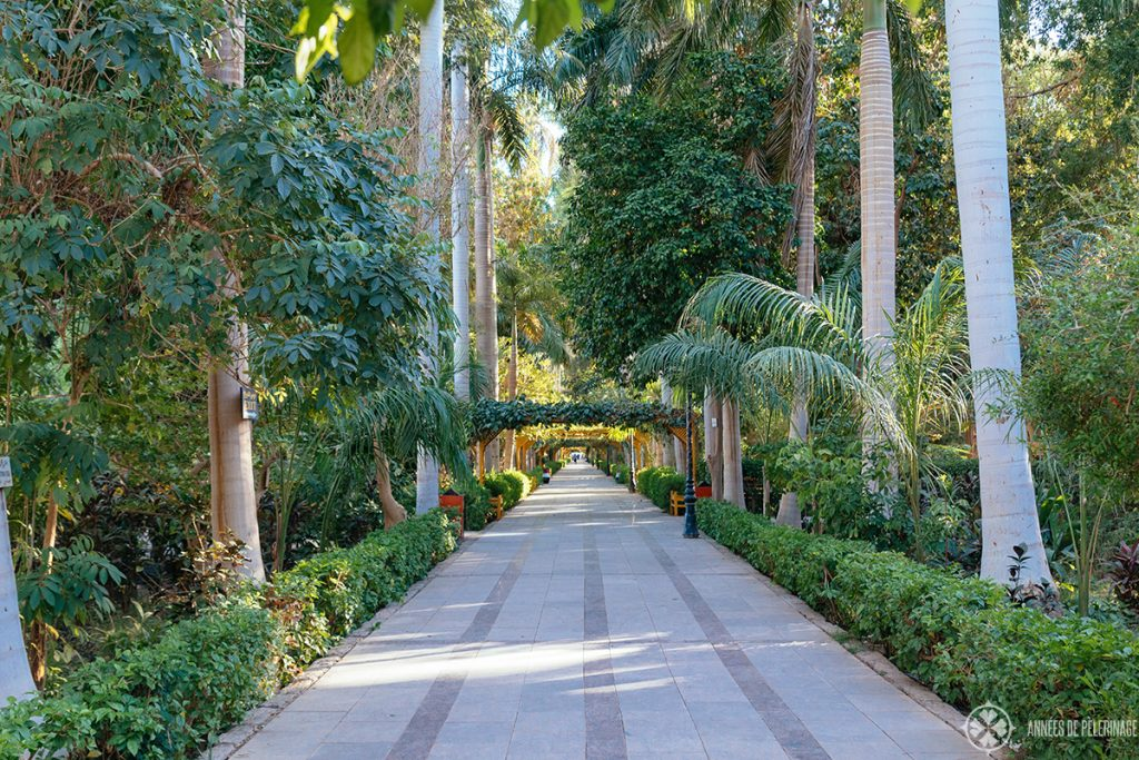 Inside the Aswan Botanical Garden - one of the best things to do in Aswan, Egypt