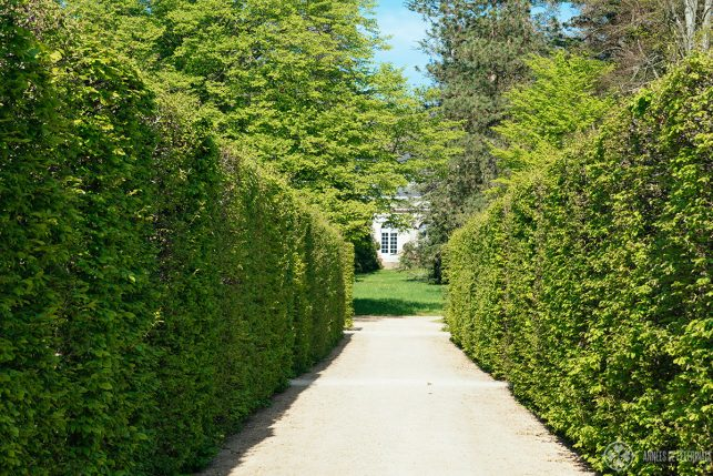 View along the hedges of the bosquet garden in pillnitz
