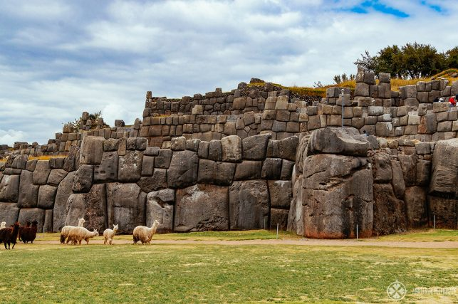 The Sacsayhuamán inca ruins with a flock of lamas below it, Cusco, Peru