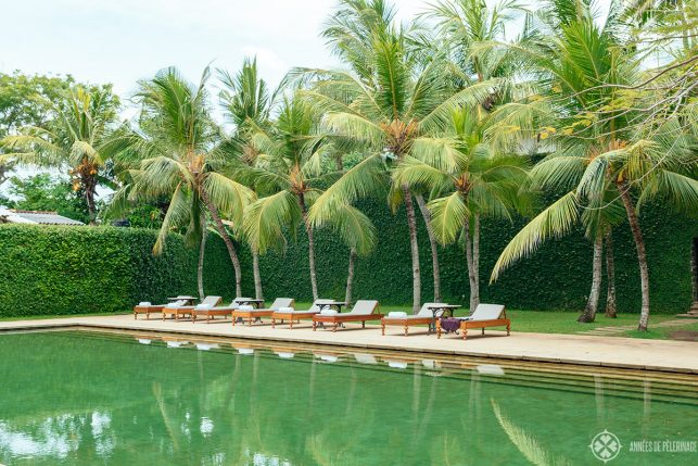 View of the sun loungers at the pool of the Amangalla luxury hotel in Sri Lanka