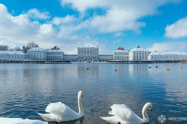 Swans in front of Nymphenburg Palace in Winter