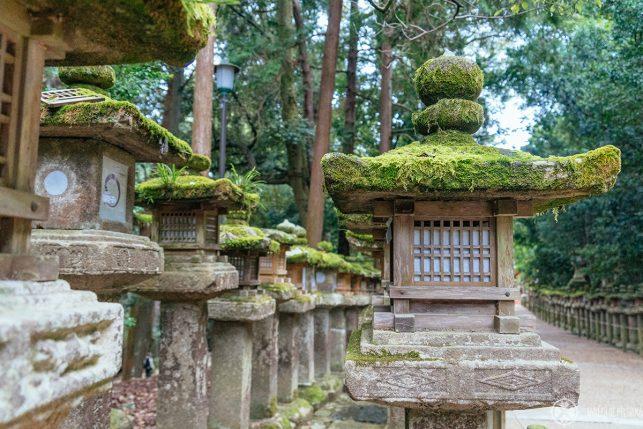 Just one of many moss-covered lanterns at Kasuga Taisha at the far back of Nara Park
