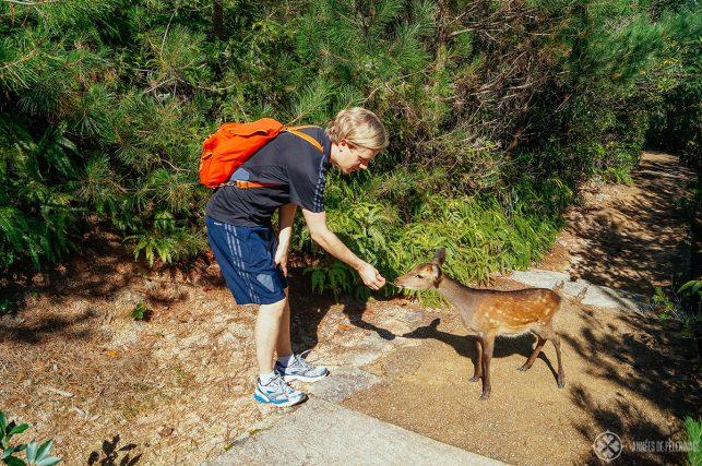 Me feeding one of the wild deer on Miyajima Islands