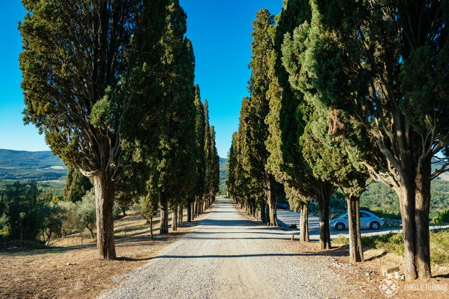 The cypress lined road at the back of the hotel