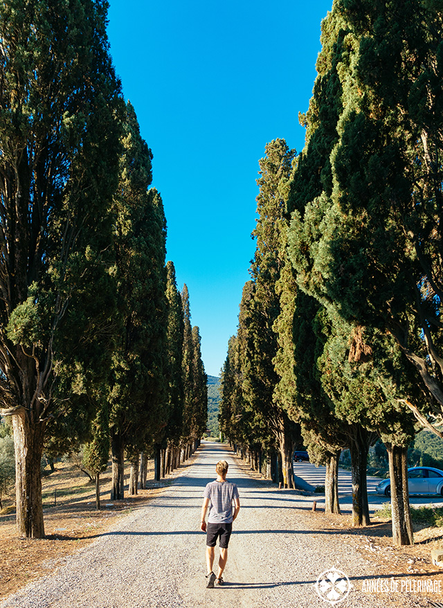 Me, walking down a typical cypress-lined road in Tuscany