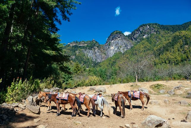 A group of horses with the Tiger's Nest in the far back (those tiny white dots on the cliff)