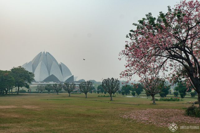 View of the Lotus Temple from the gardens surrounding it - It is one of the best free things to do in New Delhi