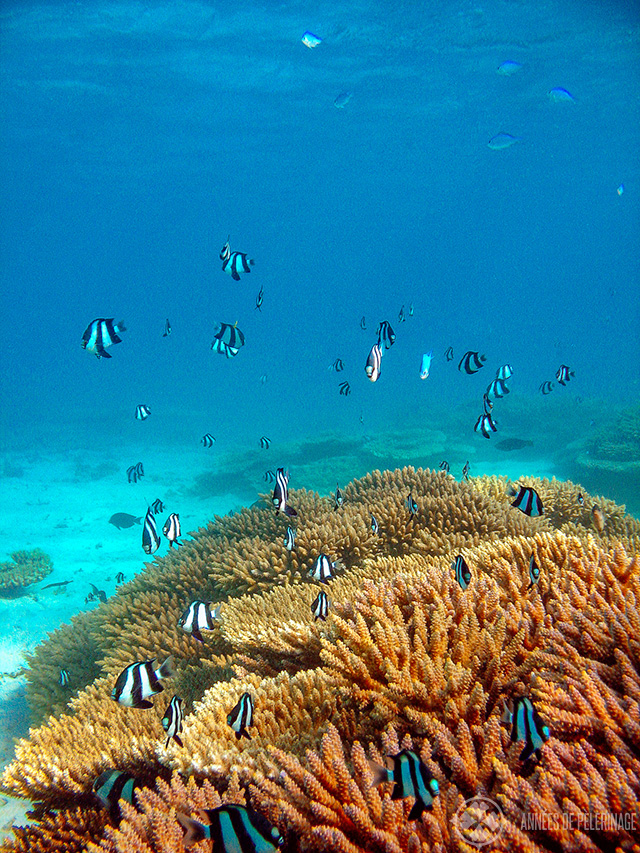 Underwater shot of one of many beautiful reefs - one of the most fun things to do in Mauritius