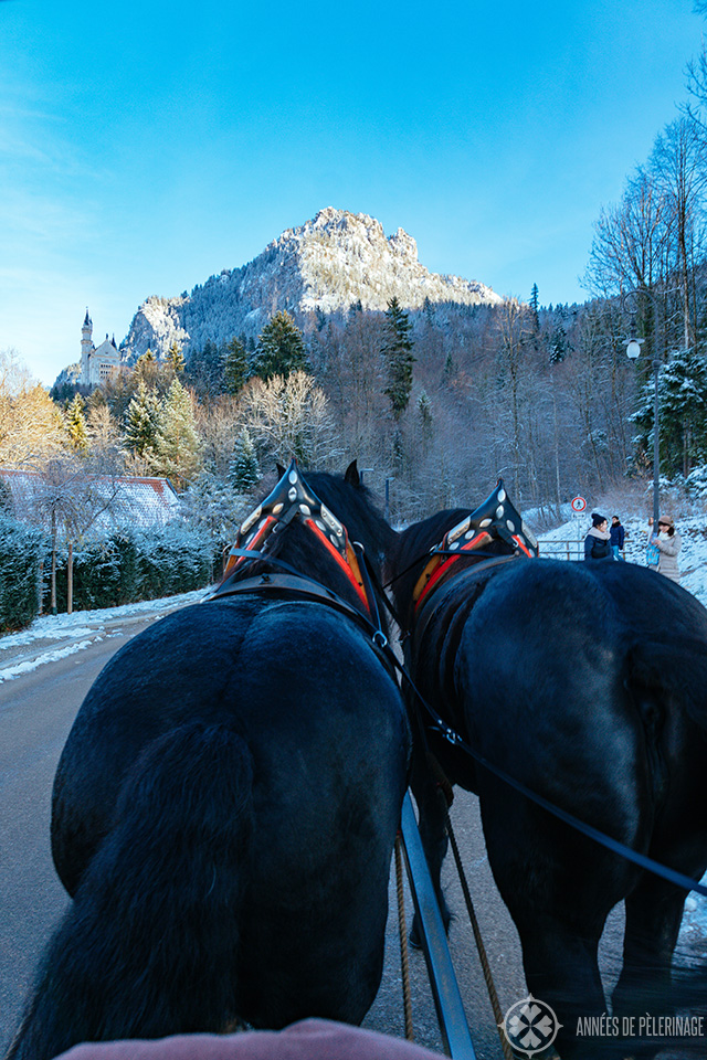 The horse carriage up to Neuschwanstein castle