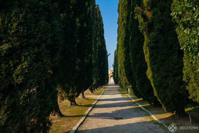 A cypress lined path on the cemetary of Venice